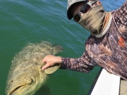 key largo goliath grouper