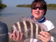 sheepshead key largo