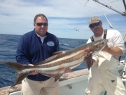key largo cobia