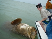 goliath grouper key largo